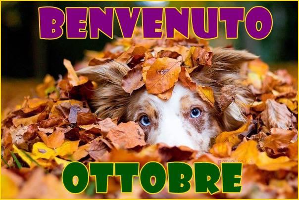 Attività Estense Dog mese di Ottobre