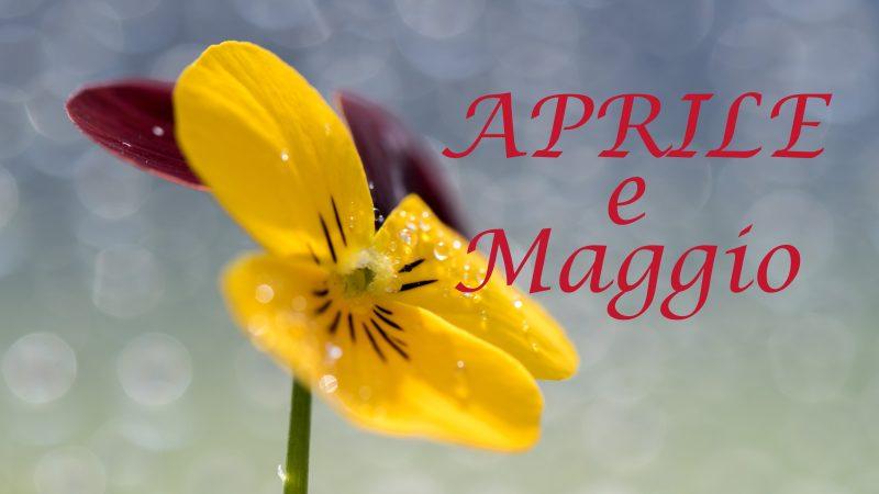 Attività Estense Dog mese di Aprile e Maggio
