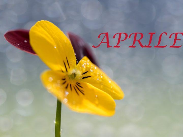 Attività Estense Dog mese di Aprile