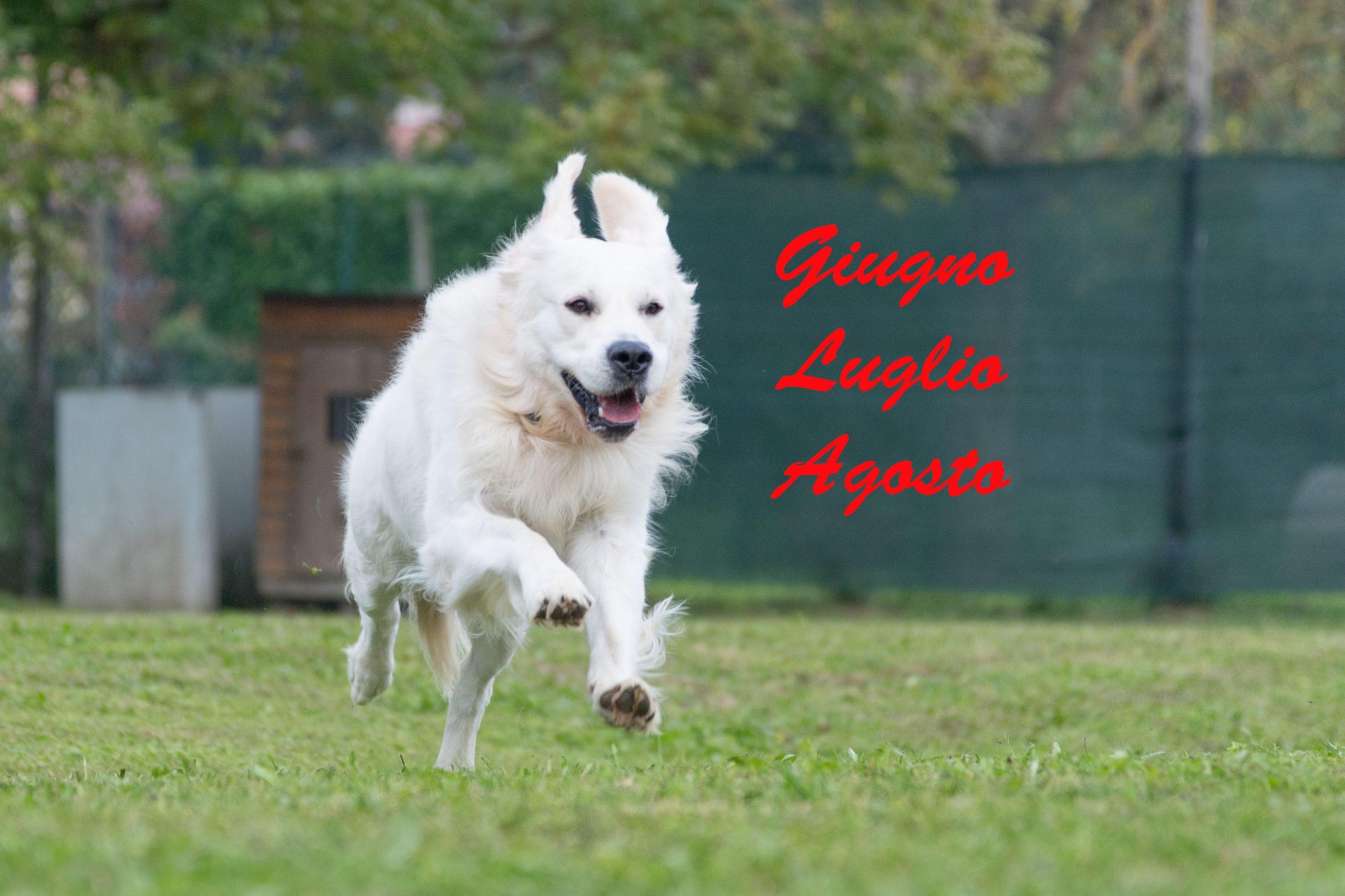 Attività Estense Dog mese di Giugno