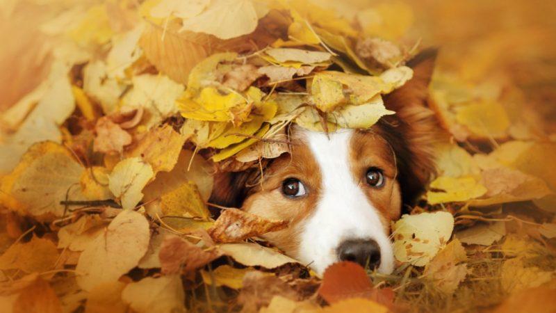 Estense Dog mese di Ottobre
