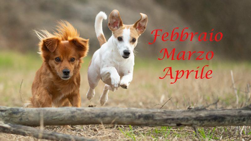 Estense Dog mese di Febbraio Marzo Aprile